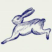 picture of hare  - Running hare - JPG