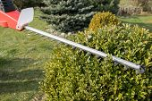foto of electric trimmer  - Cutting wintergreen plant by electric telescopic fence scissors - JPG