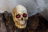 stock photo of condolence  - Human skull with red grape in the eyes on brown log - JPG