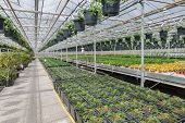 pic of greenhouse  - Dutch Garden center selling plants in a greenhouse - JPG