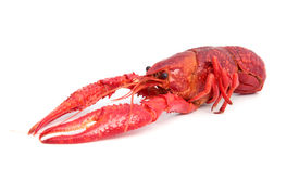 picture of crawdads  - Cooked crayfish in typical red color - JPG
