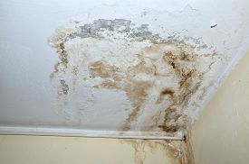 picture of spores  - Mold in the corner of the white ceiling and yellow wall with white heat pipe - JPG