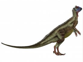 image of omnivore  - Hypsilophodon was an omnivorous dinosaur that lived in the Cretaceous Period of England - JPG
