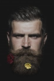 picture of long beard  - Head of serious unshaven man with long beard and handlebar flowerbed moustache with colorful flowers red and yellow colors isolated on black background vertical picture - JPG