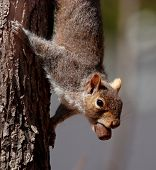 Cute Squirrel With Happy Catch poster