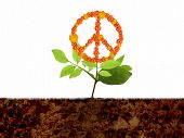 Growing peace symbol