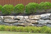 stock photo of inkberry  - Boulder retaining wall at a commercial site with Inkberry Holly and Daylily - JPG