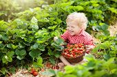 Kids Pick Strawberry On Berry Field In Summer poster