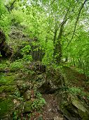 Spring Green Forest. Mountains In The Spring. Rocks In The Forest.spring Green Forest. Mountains In  poster