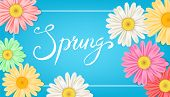 Spring Banner. Hand Drawn Lettering. Background With Chamomile, Daisy. Spring Time Template, Flyer,  poster