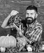 Farmer Bearded Guy With Homegrown Harvest On Table Hold Grapes. Farmer Proud Of Grapes Harvest. Man  poster