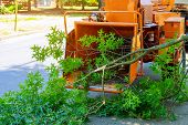 Professional Gardeners Are Putting The Branches Of A Trimmed Tree In A Wood Chipper And Pickup Truck poster