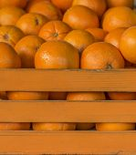 Oranges In The Orange Crate. Cage Full Of Oranges. poster