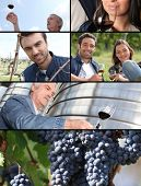 Images of the wine industry