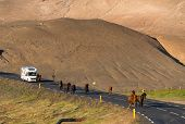 Icelandic Horse On The Road Of Scenic Nature Landscape Of Iceland. The Icelandic Horse Is A Breed Of poster