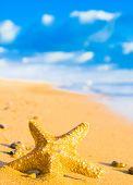 image of starlet  - Under the Sun Sea Starlet - JPG