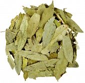 pic of cassia  - dried senna  leaves  - JPG