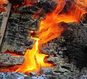 stock photo of fire insurance  - Wild fire - JPG