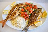 image of red snapper  - grilled gilt - JPG
