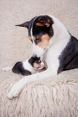 picture of puppies mother dog  - Newborn basenji puppy - JPG