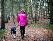 picture of great dane  - Rear view of a Female walking with Great Dane Puppy along a footpath in a country park - JPG