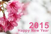 picture of sakura  - Happy New Year 2015 and Sakura flowers blooming blossom - JPG