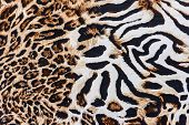 picture of panther  - texture of print fabric striped leopard for background - JPG
