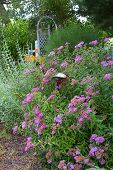 picture of english cottage garden  - English cottage garden with lots of flowers and herbs and trellis in background - JPG