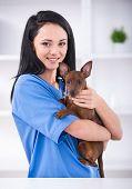 stock photo of veterinary clinic  - Veterinary clinic - JPG