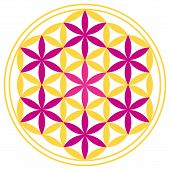 foto of merkaba  - Seven magenta stars can be found in The Flower of Life - JPG