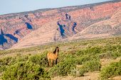 foto of horses eating  - wild horse eating grass at Monument Valley Arizona - JPG