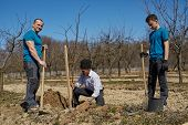 foto of orchard  - Senior farmer teaching his grandson and his son in law how to plant a tree in an orchard three generations family working together - JPG