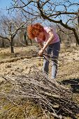 pic of spring-cleaning  - Caucasian woman spring cleaning the orchard gathering cut branches to throw them away - JPG