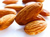 image of seed bearing  - Almond trees become productive and begin bearing fruit after five years - JPG