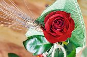 image of rose close up  - Colorful red rose and petals close up - JPG