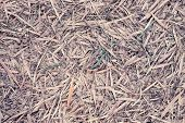 foto of bamboo leaves  - Bamboo leaves fall on ground may use as background - JPG