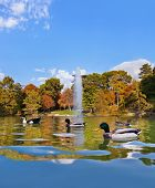foto of duck pond  - Ducks in pond near Crystal Palace  - JPG
