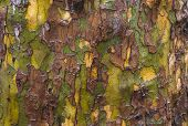 picture of cameos  - military pattern from nature on a wet tree - JPG