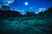 Bright Full Moon Above Wilderness Area In Forest, Serenity Nature Background. poster