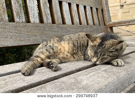 poster of Portrait Of Sleepy Brown Cat. Maltese Cats. Nice Brown Cat Sleeping In Barraka Garden, Valletta. Sie