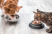Dog And A Cat Are Eating Together From A Bowl Of Food. Concept Cat And Dog Friendship poster