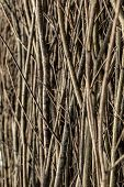 A Lot Of Cut Branches. A Bunch Of Flexible Branches. The Branches Of Hazel And Willow. poster