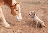 stock photo of gentle giant  - Big horse and a dog - JPG