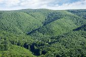 Landscape Of Beautiful Green Lush Foliage, Greenery Or Forest On Hill. poster