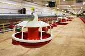 foto of hatcher  - The modern and new automated integrated poultry farm - JPG