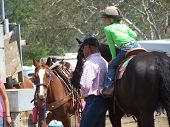 picture of barrel racing  - Little girl waits with dad at rodeo - JPG