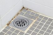 stock photo of spores  - Black mold growing on shower tiles in bathroom - JPG