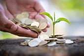 Hand Giving A Coin To A Tree Growing From Pile Of Coins.plant Growing In Savings Coins Money. Green  poster