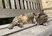 Portrait Of Sleepy Brown Cat. Maltese Cats. Nice Brown Cat Sleeping In Barraka Garden, Valletta. Sie poster