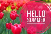 Hello Summer Banner. Text On The Photo. Text Hello Summer. New Month. New Season. Summer. Text On A  poster